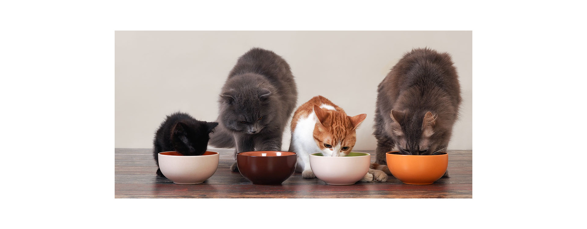 Cat food: how to choose the right one.